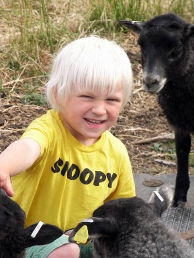 Glad med lamm