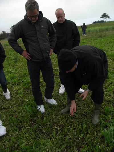 Dr John, sheep expert, betar som ett lamm