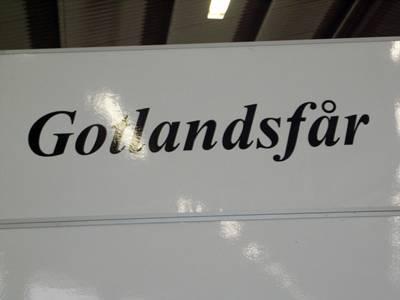 Gotlansfår, gotlandstun, gotlandsänge, mycket Gotland är det…