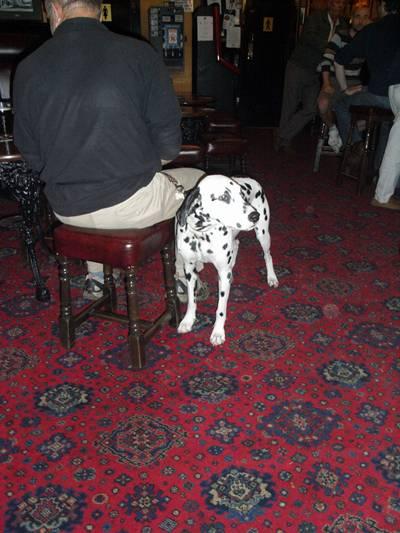 Hund på pub