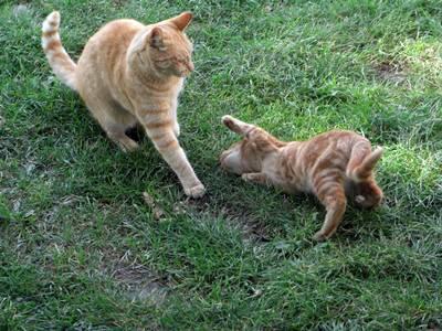 Kom an katten!