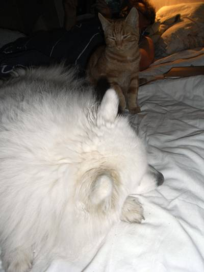knähunden låtsas att hon sover