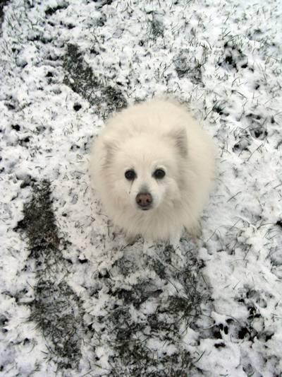 så vit som en snö