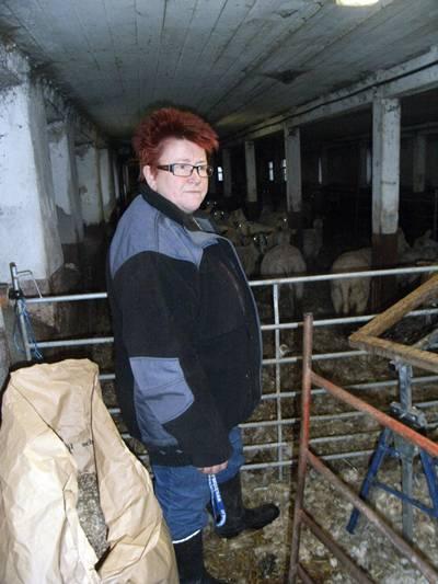 en lammkälling